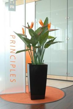graceful white birds of paradise with colorful bromelaid plantings are for