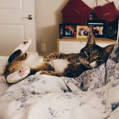 Hello there ladies by vvml cats kitten catsonweb cute adorable funny sleepy animals nature kitty cutie ca