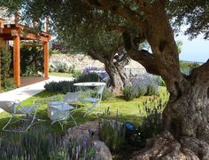Allow the lines of beds, paths and other features to drift loosely through the landscape to avoid any sense of formality. Instead, create a sense of order by layering different elements over one another — a grape pergola over a picnic table, a fig tree over a simple patio water feature or an olive tree over a planting of lavender, as pictured here.
