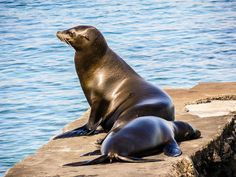 Sea lions by travellingred