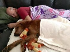 All Tucked In - funnydogsite.com #dogs #funny #cute