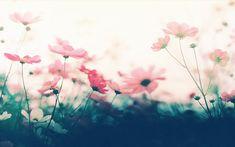 wallpaper pink flowers by Analaurasam on deviantART