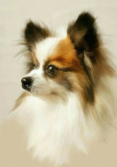 Chihuahua - Rembrantus The art of realistic portrait painting Perro Papillon, Papillion Dog, Animal Paintings, Animal Drawings, Loro Animal, Animals Watercolor, Pomeranian Chihuahua Mix, White Chihuahua, Painting Gallery