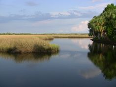 Crystal River Preserve State Park can be a beautiful getaway. Check out our guide to visiting at http://www.rv123.com/blog/crystal-river-preserve-state-park-florida/