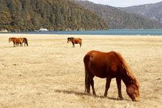 Researchers Reveal Chinese Horses' Origins
