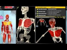 MUSCLE MOTION A Dynamic Visual Resource That Makes Musculoskeletal Anatomy And Kinesiology Easier To Learn Remember Understand