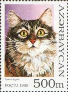 Turkish Angora (Felis silvestris catus)