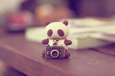 @capturememories20 en instagram 📷🍃 #Panda