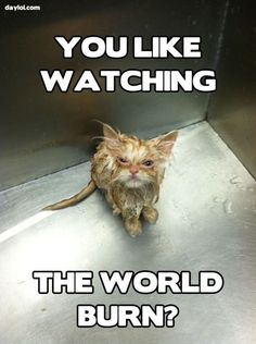 Angry kitten is really angry ... and wet - DayLoL.com - Your Daily LoL!