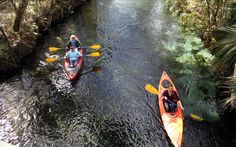 10 Secret Florida Theme Parks   Best Theme Parks in Florida   Cool Things to Do in Florida   Silver Springs Ocala