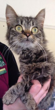 This young female cat was brought into us yesterday after some children were caught throwing stones at her in the Llanelli area. She isn't microchipped so please share to see if we can find her owner. Thanks very much.