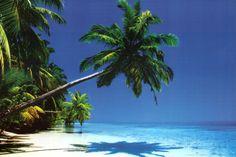 Maldives (Palm Tree Over Beach) Art Poster Print Prints at AllPosters.com
