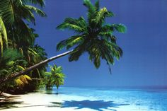 Maldives (Palm Tree Over Beach) Art Poster Print Prints at AllPosters.com