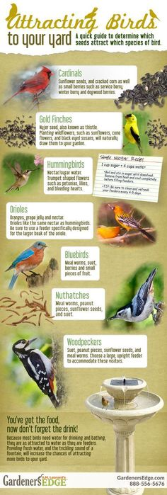 Attracting Birds to Your Yard: A quick guide to determine which seeds attract which species of bird. #birdhousetips #buildabirdhouse