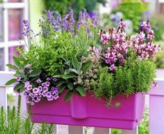 """Kompozycja w barwach dopełniających się: fioletowa lawenda, drobne, lilioworóżowe petunie i różowa gaura """"przyprawione"""" wonnymi ziołami: szałwią, miętą, różowo kwitnącym tymiankiem i rozmarynem."""