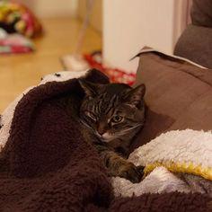 全日本が熱いとか石川修司サイコーとかアタシには何にも関係ないし、うるさくて寝れないんでもう静かにしてもらえませんか? #猫 #ねこ部 #愛猫 #猫バカ #猫様 #不満だらけ #飯食わせろ