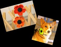 Dog collar flowers in a variety of colors by PuppyPawzBoutique