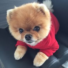 Find images and videos about cute, dog and animal on We Heart It - the app to get lost in what you love. Cute Small Animals, Baby Animals Super Cute, Cute Baby Dogs, Animals And Pets, Really Cute Puppies, Super Cute Puppies, Cute Dogs And Puppies, Baby Animals Pictures, Cute Animal Drawings