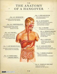 the anatomy of a hangover great to know