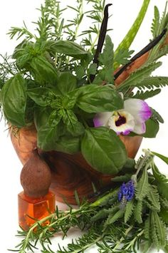 Common Medicinal Herbs and Uses