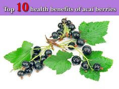 Black Currant oil is beneficial for dry skin, joint health, immune system support, fat metabolism and PMS or menopause problems. Acai Benefits, Oil Benefits, Health Benefits, Women's Health, Black Currant Oil, Water Retention Remedies, Beauty Vitamins, Black Currants, Acai Berry