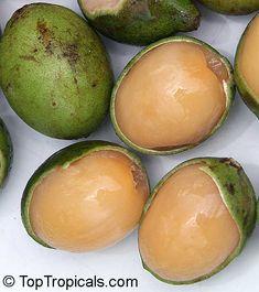 Melicoccus bijugatus, Melicocca bijuga, Spanish Lime, Genip, Mamoncillo, Quenepa, Limoncillo