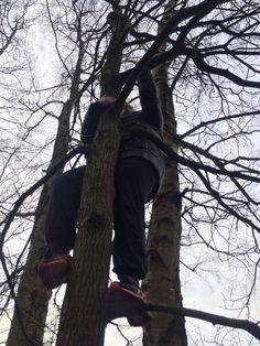 De laatste tijd ga ik met mijn coach Geert steeds vaker boomklimmen. Je gebruikt daarbij je gehele lijf dus ook alle spiergroepen, daar kan in mijn ogen geen sportschool tegenop.