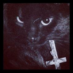 Devil kitty shuns your faith! Black Animals, Animals And Pets, Cute Animals, Black Cats, Animal Fun, Crazy Cat Lady, Crazy Cats, Black Vampire, Demon Baby