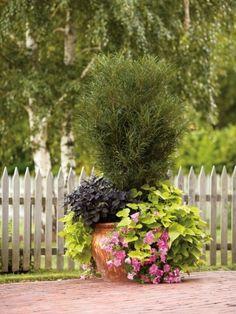 Rosemary Planter by cinnabon