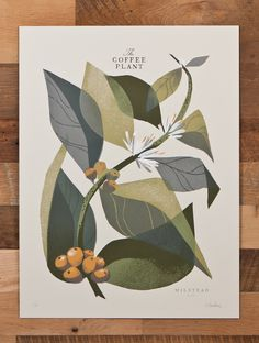 These are nice. They're some sort of botanical drawings of coffee plants. They're available as prints for lots of dollars, so best just to enjoy them online.