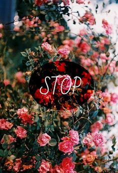 STOP CAN'T STOP
