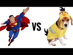 SUPERMEN vs PTASI-PIES !!! czyli trening prostowników i stabilizacja centralna, - YouTube