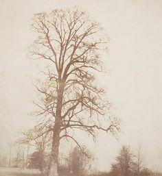 Elm in Winter, 1845. Salted paper print.