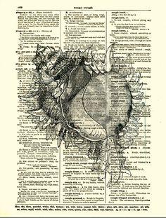 Dictionary Art Print, Shell Print, Antique Dictionary Page, Seaside Decor… Seaside Art, Seaside Decor, Natural Forms Gcse, Natural Form Artists, Gcse Art Sketchbook, Sketchbook Ideas, Sketchbooks, Sketching, Shell Drawing
