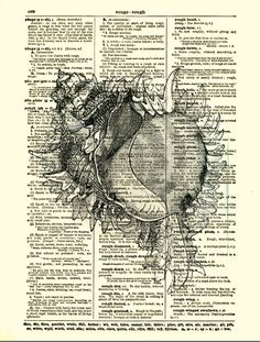 Dictionary Art Print, Shell Print, Antique Dictionary Page, Seaside Decor, Natural History, Murex Regius.