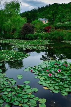 size: Photographic Print: Waterlies in Front of Monet's House, Giverny, Normandy, France, Europe by James Strachan : Normandy France, Physical Geography, Thing 1, Famous Places, France Europe, Natural World, Scenery, Fine Art, Photography