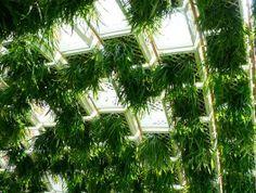 пластиковые ящики с растениями внутри павильона
