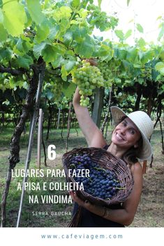 6 lugares quem oferecem aos turistas a pisa e colheita na Vindima da Serra Gaúcha Rio Grande Do Sul, Pisa, Hanging Chair, Adventure Travel, Places To Go, Top, South America, Bucket List Travel, Wine Vineyards