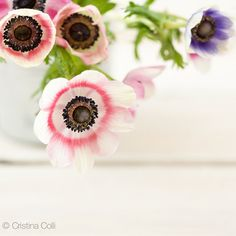 Floral still life photography - Anemones in a zinc pot - Feminine romantic Spring wall art - Home decor Giclée print  available in my Etsy shop - Photography & Styling by Cristina Colli