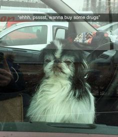 37 of the Funniest Animal Pictures -