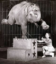The one and only Opal with Polack Bros. Circus, 1955