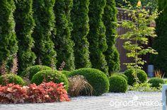 """Jak """"ożywić"""" mój szmaragdowy ogród - strona 1095 - Forum ogrodnicze - Ogrodowisko Garden Inspiration, Garden Design, Backyard, River, Gardening, Plants, Outdoor, Emerald, Ideas"""