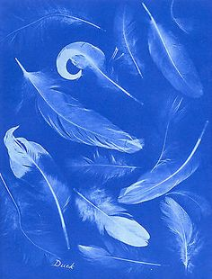 Anna Atkins – at the vanguard of photography. Atkins, Photography Projects, Fine Art Photography, Cyanotype Process, Family Art Projects, Sun Prints, Blue Aesthetic, Printmaking, Shades Of Blue