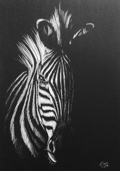 Zebra - White pencil drawing on black paper