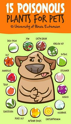 ~Beware -15 Poisonous Plants For Pet's~