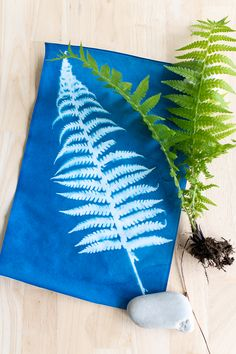 How to Make Sunprints with Ferns - Finding Silver Pennies