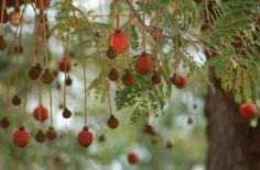 Dawadawa (Parkia biglobosa)