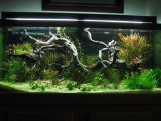 Aquarium driftwood | Driftwood UK