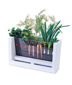 Designed for little hands, this clear plastic case lets children observe radishes, carrots and onions as they sprout. Labels and a growth chart help educate young gardeners.