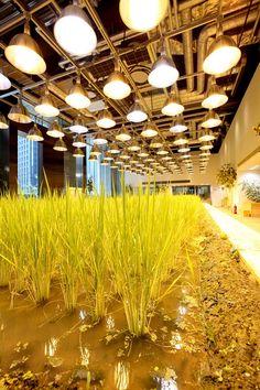 pasona rice paddy3 urbangardensweb